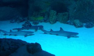 Москвариум - акулы