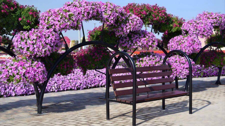 Цветочный сад в Эмиратах