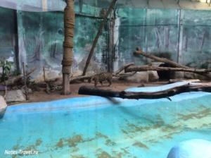 Ягуар- зоопарк Кхао Кхео