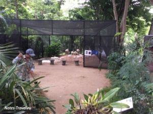 Розовые фламинго- зоопарк Кхао Кхео