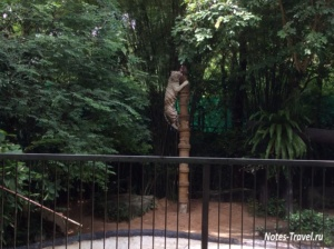 Тигр - зоопарк Кхао Кхео