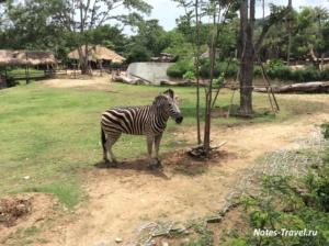 Зебра - Кхао-Кхео (Таиланд)