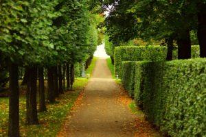 Летний сад - Санкт-Петербург